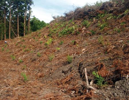 植林による森林資源の保護・育成とCO2の再吸収・再固定
